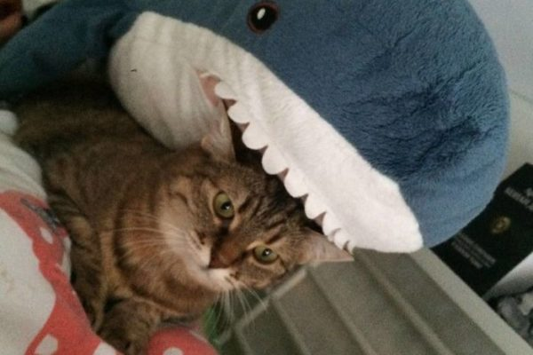 Ikea Shark Plush