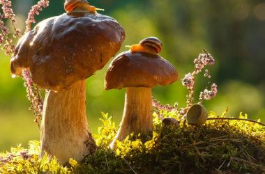 mushroom-photography-vyacheslav-mishchenko-2