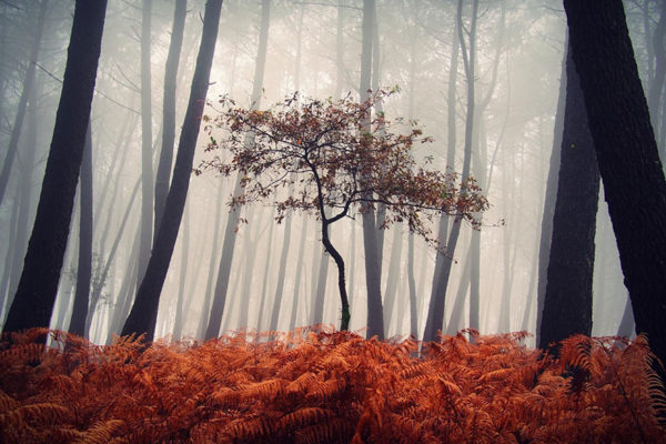mystic-forest-lanscapes-guillermo-carballa-9